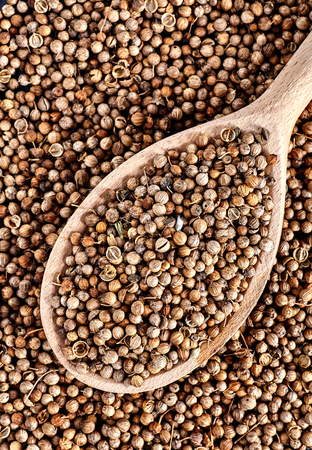 coriandrum sativum: Top view of spoon full of dried coriander seeds Coriandrum sativum is on coriander seed background.