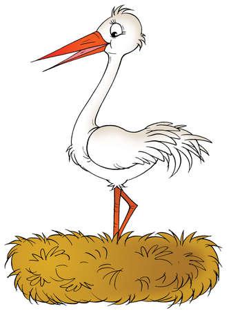ridicolo: Cicogna bianca
