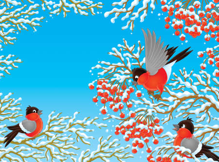 flock of bullfinches perching on a rowan photo