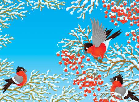perching: flock of bullfinches perching on a rowan