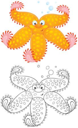 cushion sea star: Starfish