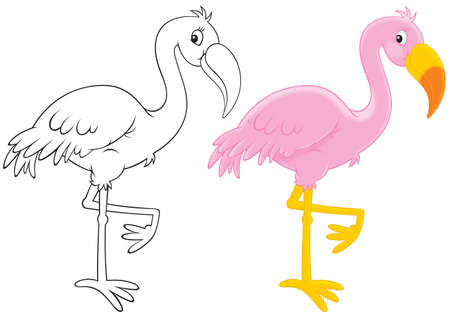 flamenco ave: Pink Flamingo