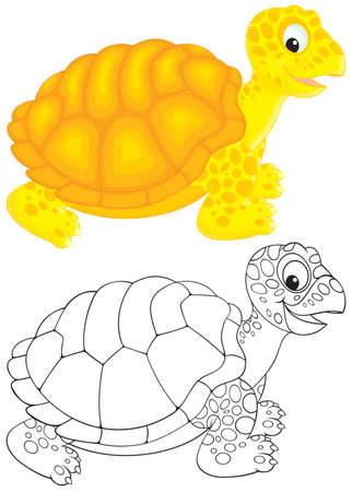 land turtle: Tortoise