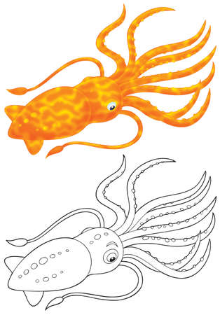 Cuttlefish photo