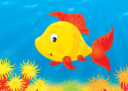 Tropical fish swimming over a colorful coral reef Stock Photo
