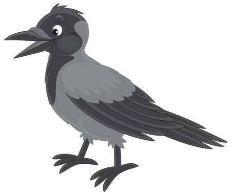 jackdaw: Crow Illustration