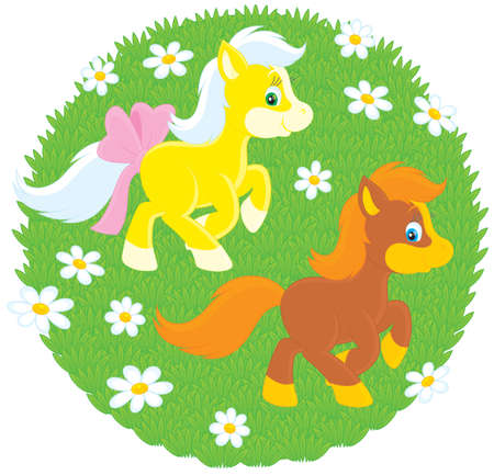 ox eye daisy: Little Ponies