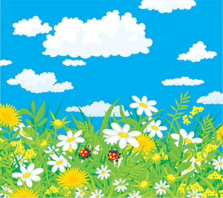 Les coccinelles dans un champ avec chamomiles