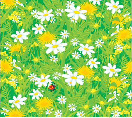 background with wild flowers and ladybug Vector
