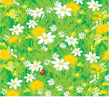 background with wild flowers and ladybug Illustration