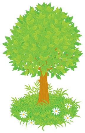 deciduous tree: �rbol
