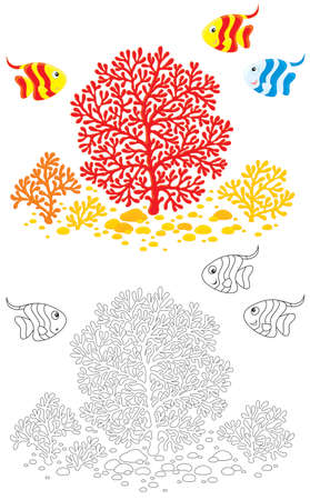 corals and striped tropical fishes Stock Photo - 13169779