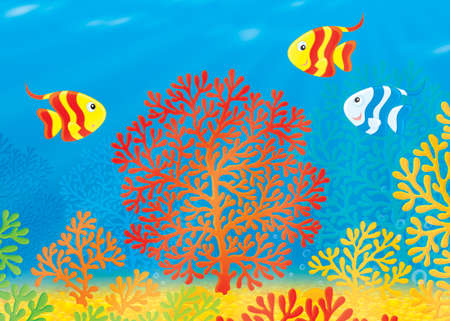 aquarian: striped fishes swimming over a colorful coral reef