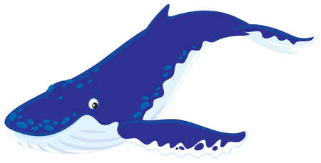 diving hunchbacked whale Vector