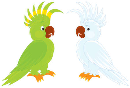 cockatoos: green and white cockatoos Illustration