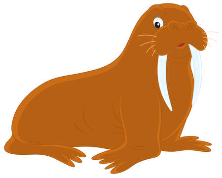 Walrus Stock Vector - 13273793