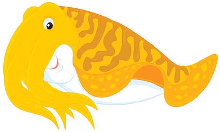 mollusc: Cuttlefish