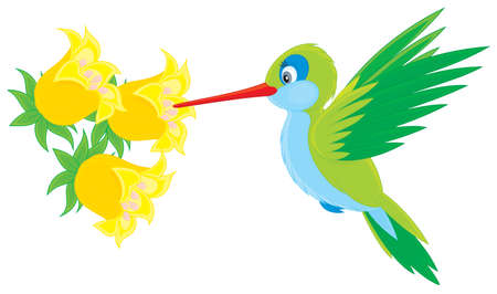 cartooning: humming-bird flying over a tropical flower Illustration