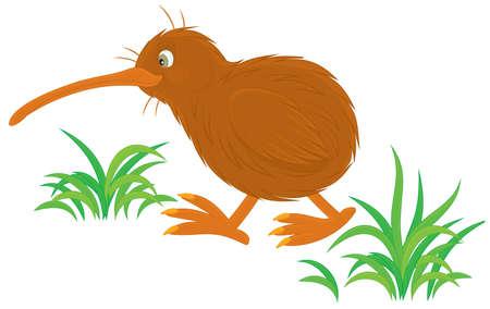 pajaro caricatura: Kiwi