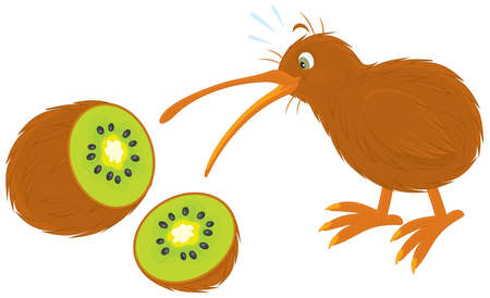 kiwi bird and kiwi fruit Illustration
