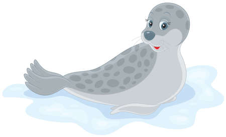 web footed: seal lying on ice Illustration