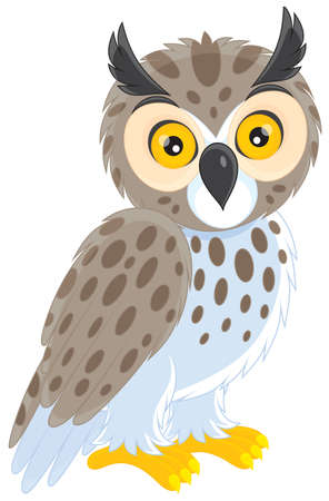 night owl: Owl Illustration
