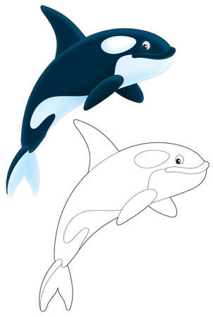 cartoon whale: Killer whale