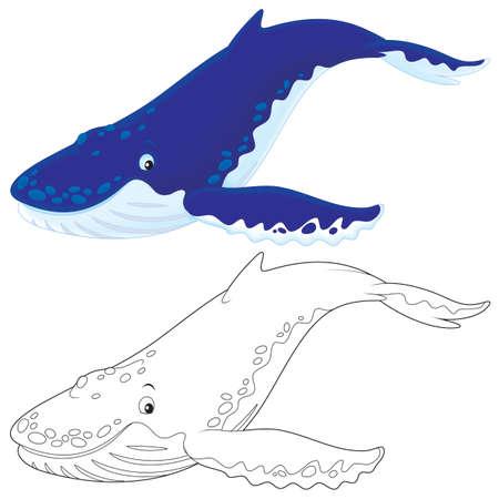 humpback: Hump-backed whale Stock Photo