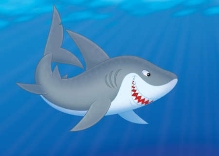 carcharodon: Great white shark swimming in a tropical sea