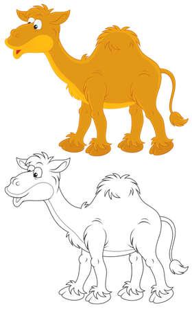 dromedary: Camel Illustration