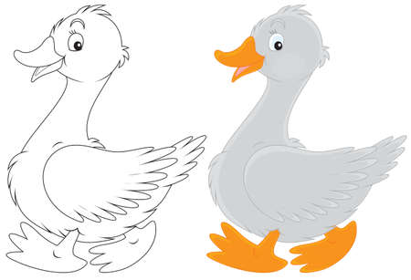 geese: Goose