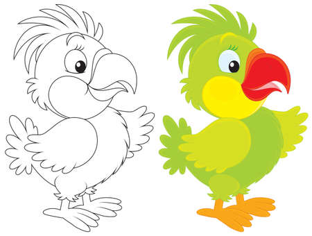 green parrot: Parrot
