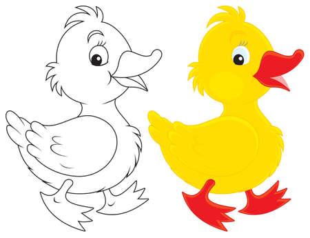 ducks: Duckling