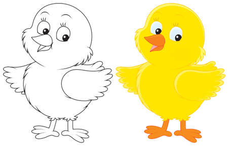 Chick Stock Vector - 16110869