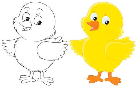 poult: Pollito