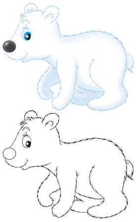 bear cub: Polar bear