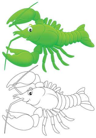 crayfish: Crawfish Stock Photo