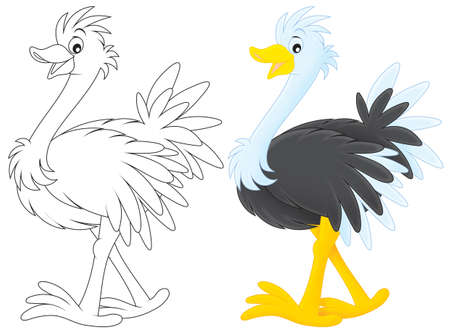 emu: Avestruz