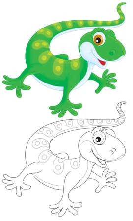 lizard: Lagarto