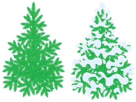 spiny: Green fir-trees, snow-covered and without snow Illustration