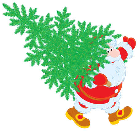 nicholas: Santa Claus carrying a green fir for Christmas