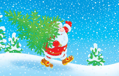 christmastide: Santa Claus carrying a small fir for Christmas