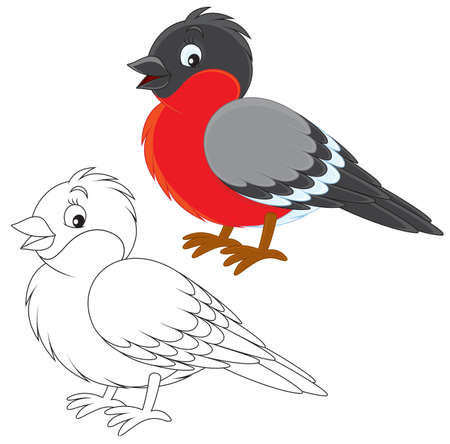 Bullfinch Illustration