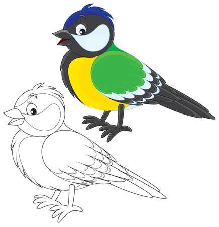 titmouse: Tomtit Illustration