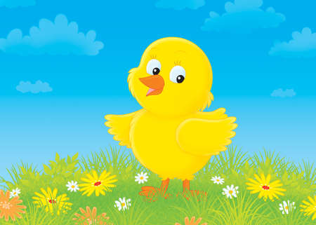 poult: Yellow chick on a flower meadow Stock Photo