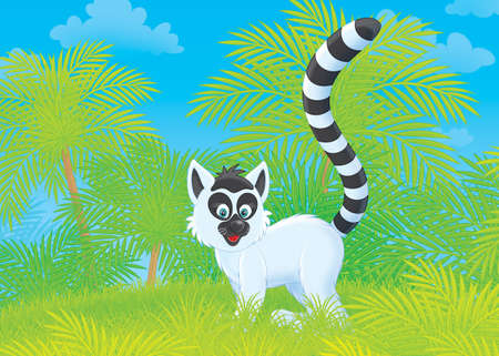 lemur: Madagascan ring-tailed lemur in a tropical forest Stock Photo