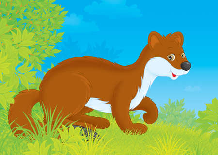 stoat: stoat walking in a forest