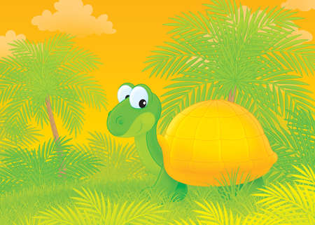 Funny turtle walking in a tropical forest photo