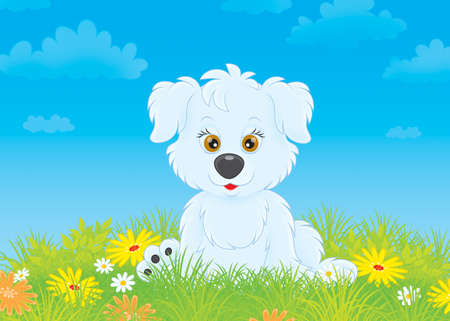 doggie: White pup sitting on a lawn among wildflowers Stock Photo