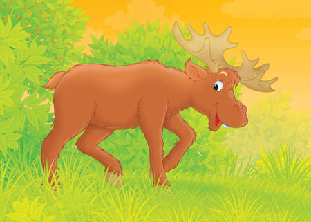 big moose: Big brown moose walking in a forest Stock Photo